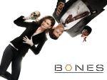 Photo Bones 14728 : bones