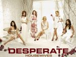 Photo Desperate Housewives 16461 : desperate-housewives