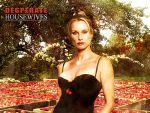 Photo Desperate Housewives 16614 : desperate-housewives